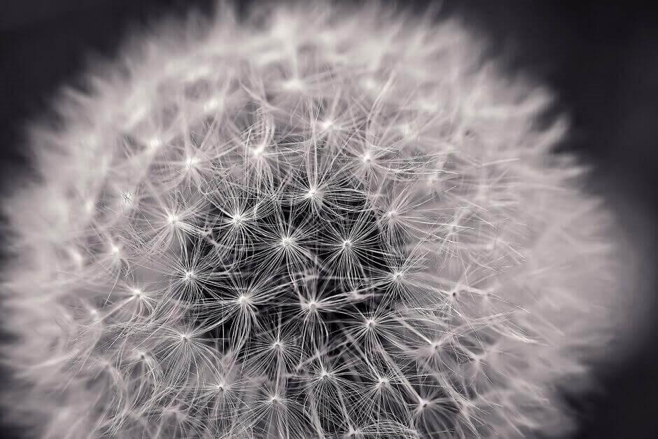 Una flor como representación del producto de Seguro de Vida Santa Lucia